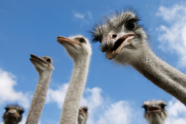 """Ostrich effect"" putting a third of students at risk of problem debt"